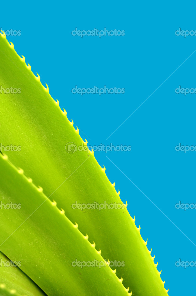 Plant With Copy Space