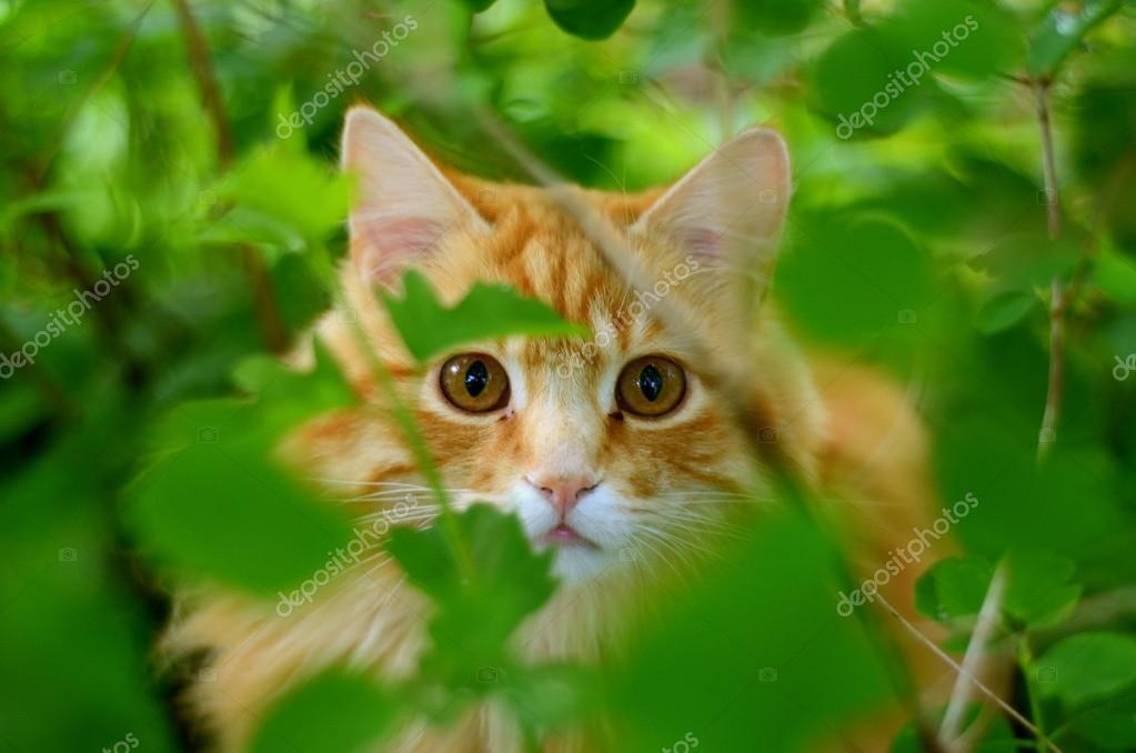 Hiding Ginger Cat