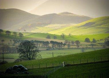 Rolling Rural Hills