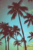 Vintage tropických palem