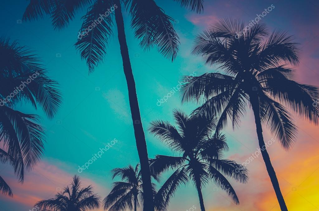 Hawaii Palm Trees At Sunset