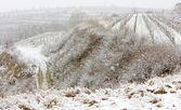 zimní vinice, eko hnízdo, Česká republika