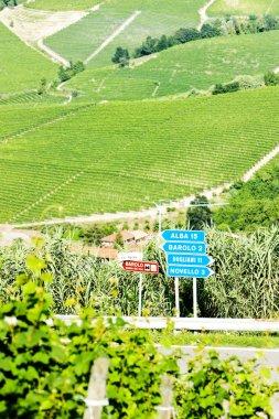 vineyars near Barolo, Piedmont, Italy