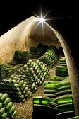 víno archiv, vinařství hort, znojmo - dobsice, Česká republika