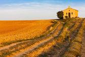 kaple s levandulové pole, plateau de valensole, provence