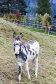 Photo Donkey on meadow