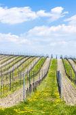 jarní vinice, Jižní Morava