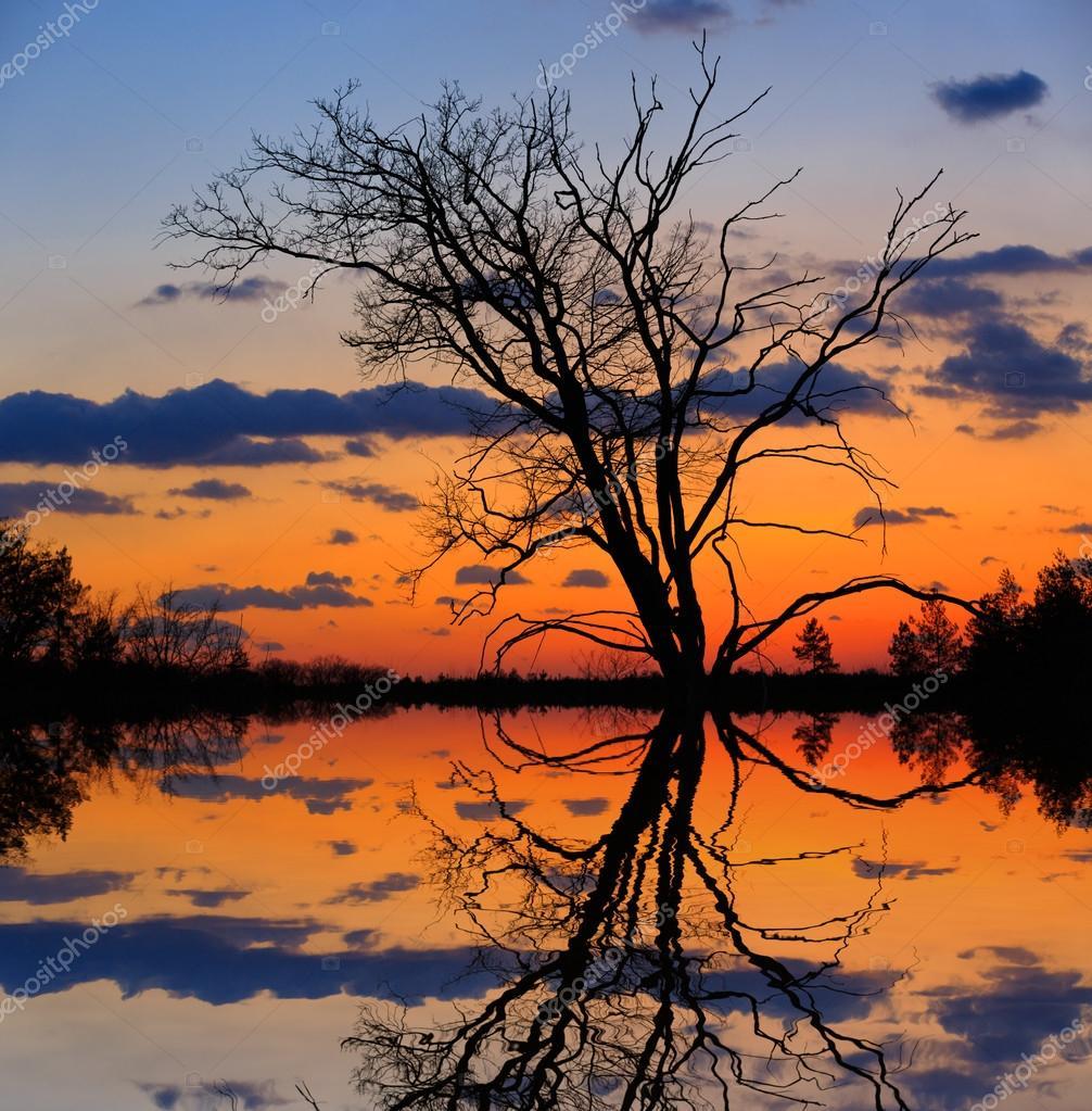 Фотообои Голые дерево на фоне заката