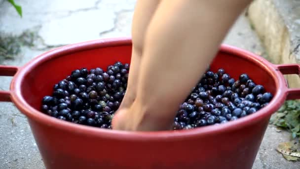 Woman crushing grapes in a plastic bucket to make wine