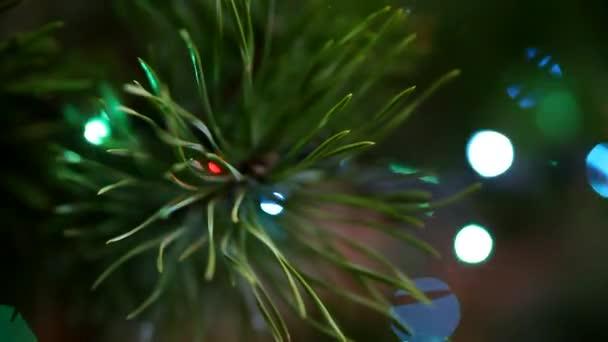 christmas lights on an evergreen christmas tree stock video - An Evergreen Christmas