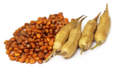 Radish seeds with dried pods