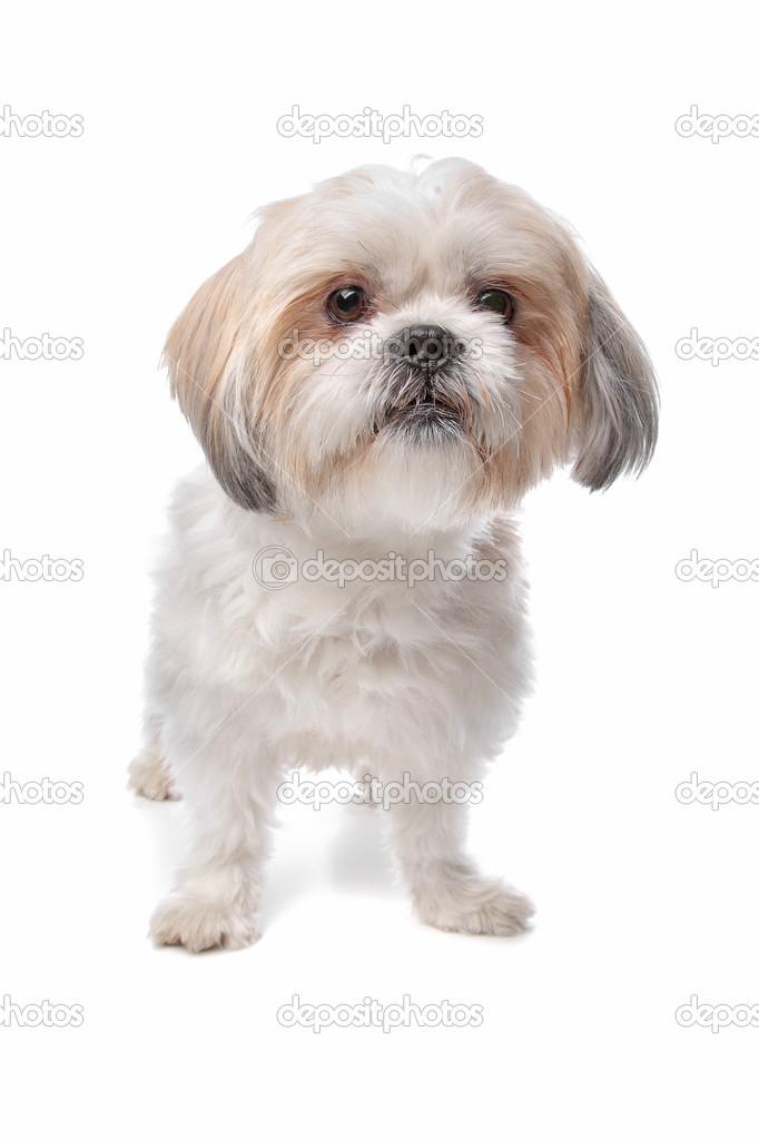 boomer hond — stockfoto © eriklam #12878904