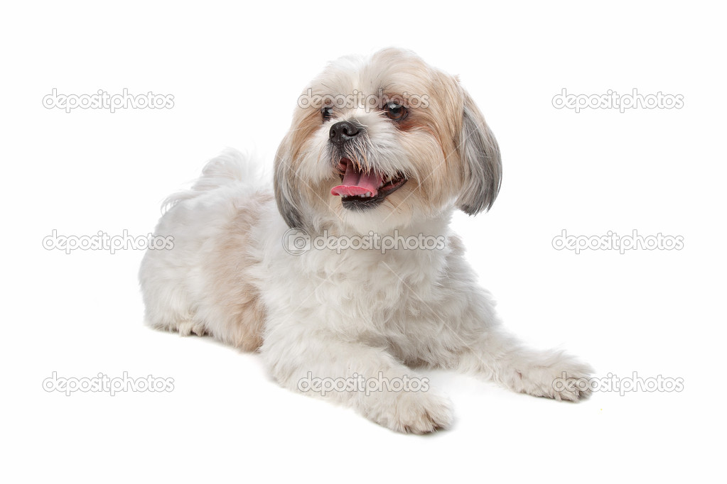 boomer dog — stock photo © eriklam #12878905