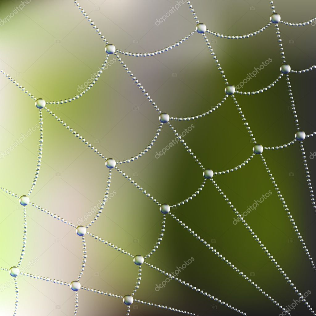 Spider web with dew drops