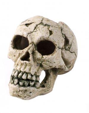 Fake human skull close up on white stock vector
