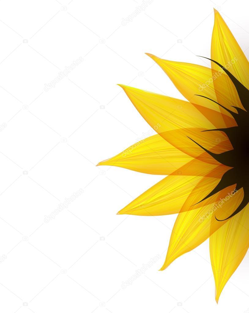 Sunflower part. Vector
