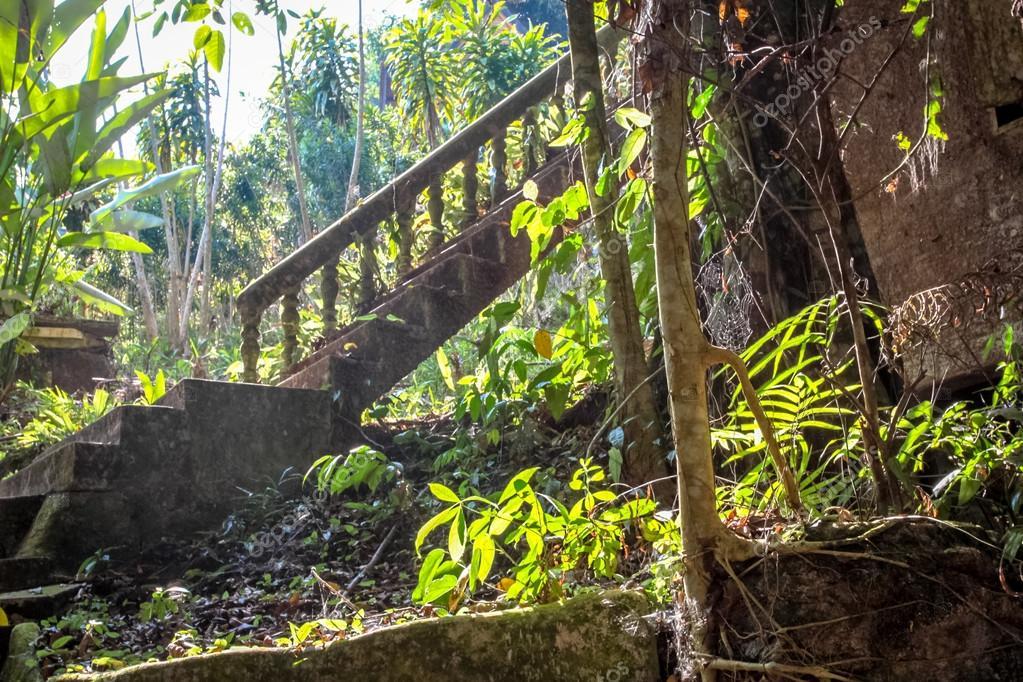 De Magische Tuin : Magische tuin illustratie download gratis vectorkunst en andere