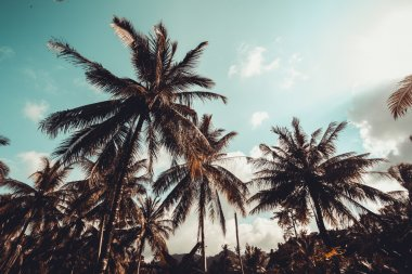 Vintage palm trees at tropical coast