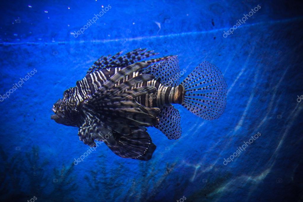 Underwater Landscape with Fishes in oceanarium
