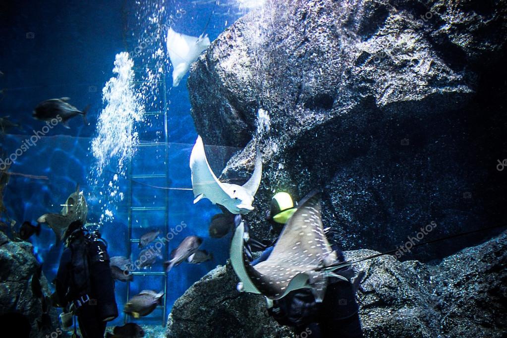 THAILAND BANGHOK 2013 MARCH 29 scuba divers enjoy dive in bangkok aquarium