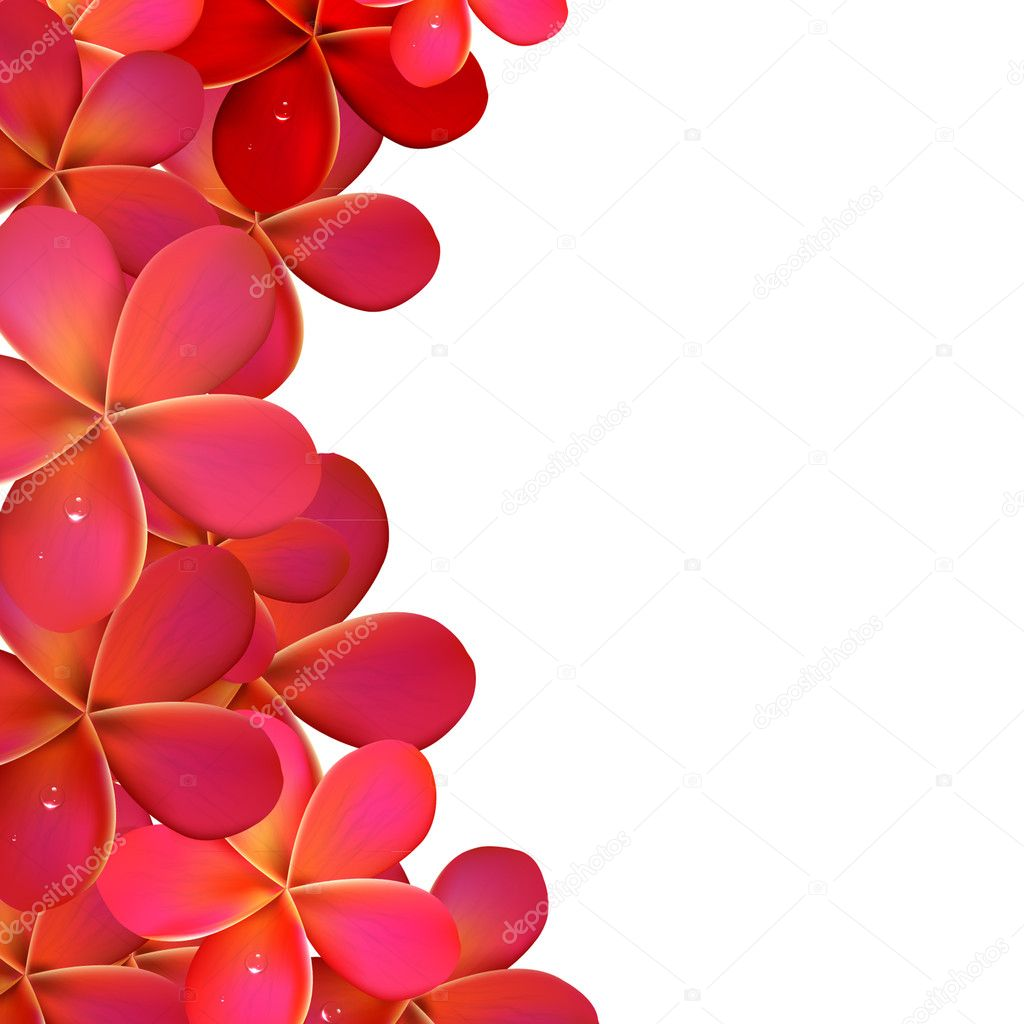 Pink Frangipani Frame