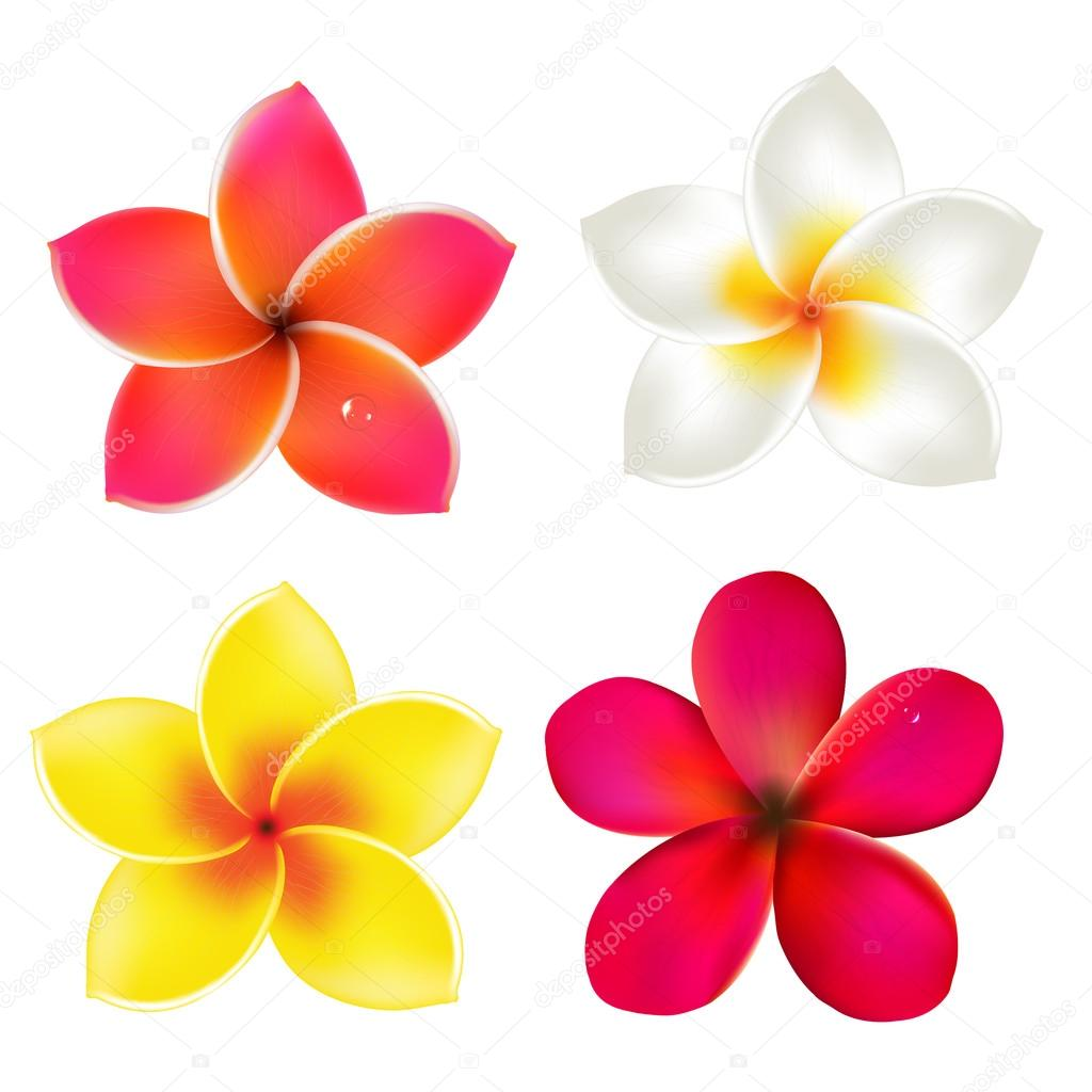 ᐈ Frangipani Drawing Stock Backgrounds Royalty Free Frangipani Vectors Download On Depositphotos