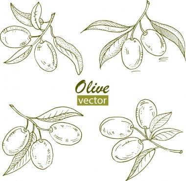 """Картина, постер, плакат, фотообои """"оливковые ветви """", артикул 24807311"""