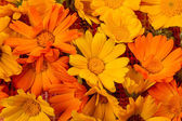 Yellow and Orange marigold flowers