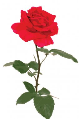 Red Roses (vector)