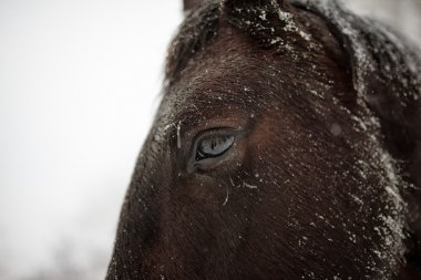 Winter close-up horse portrait