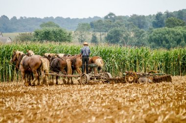 Traditional Amish Farming