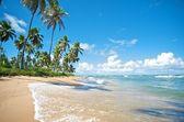 Praia forte, státu salvador de bahia, Brazílie.