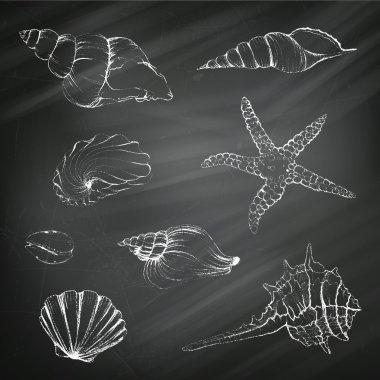 Seashells on a Chalkboard Background