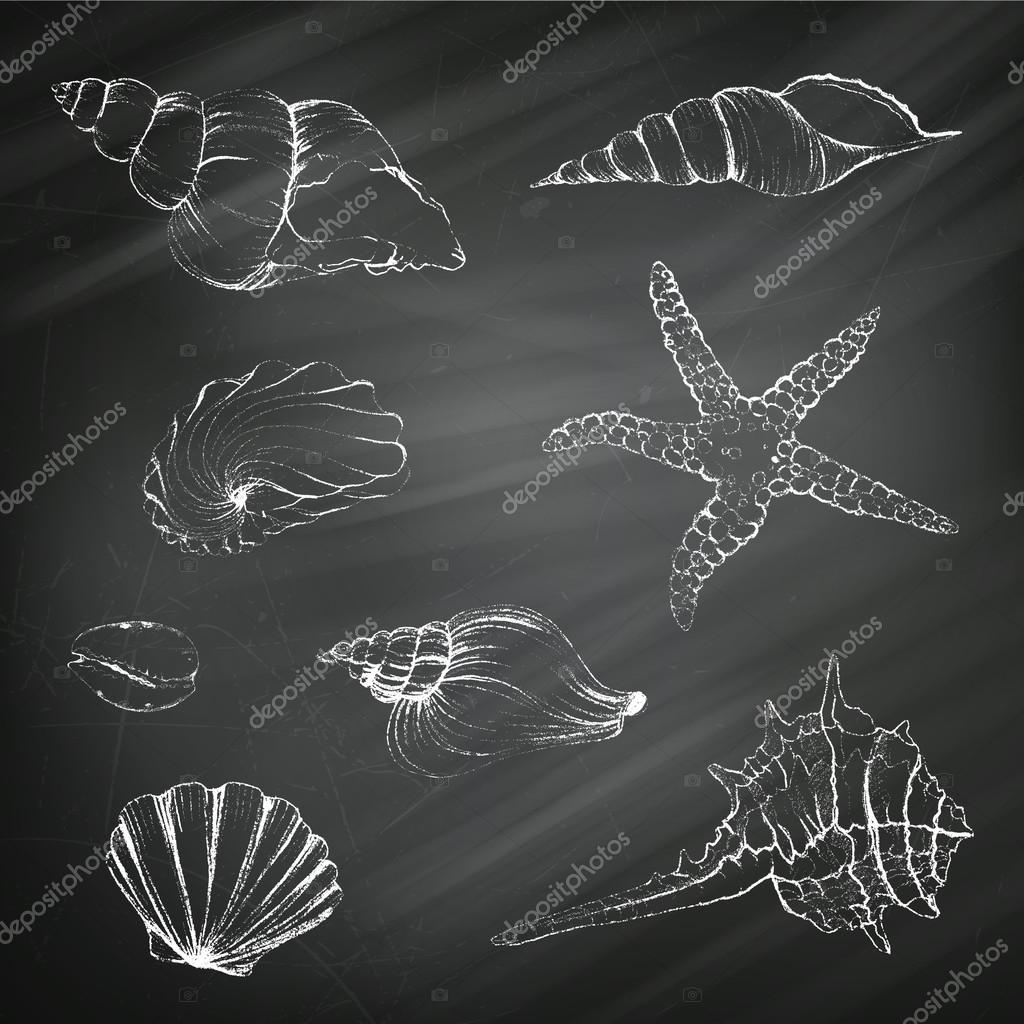 Seashells on a Chalkboard Background