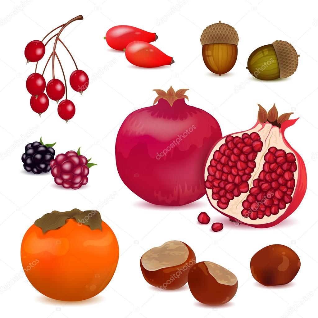 Autumnal Nature Elements