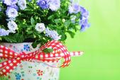 harangvirág virágok