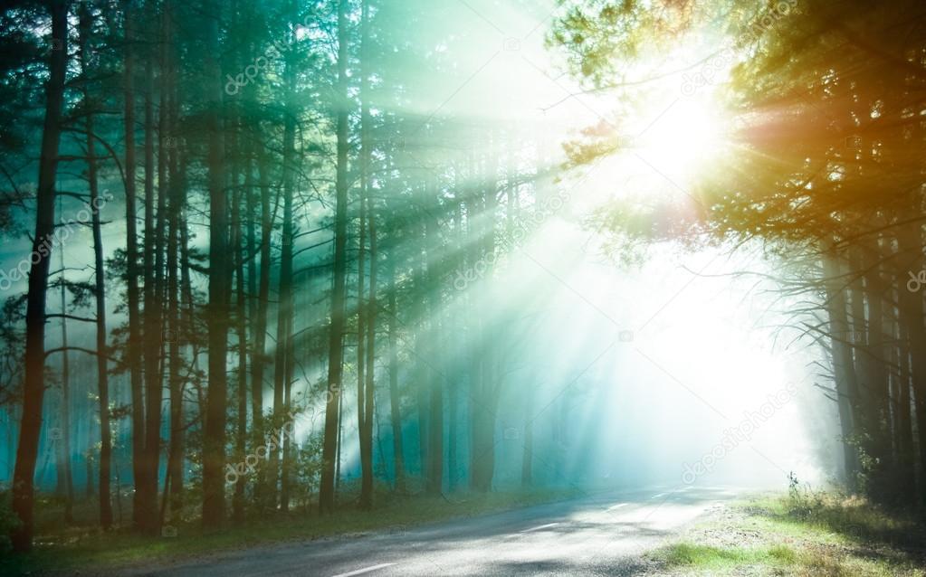Фотообои Magical forest