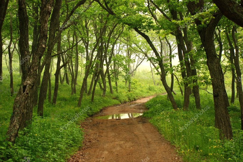 Фотообои Forest mystic way, Primorye, Russia