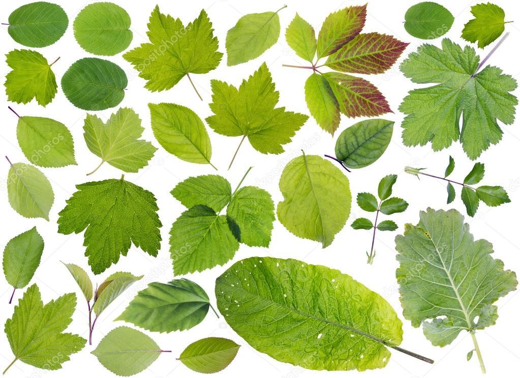 foglie di piante