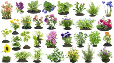 Various garden plants and flowers grow on the soil compost heap collage set isolated stock vector