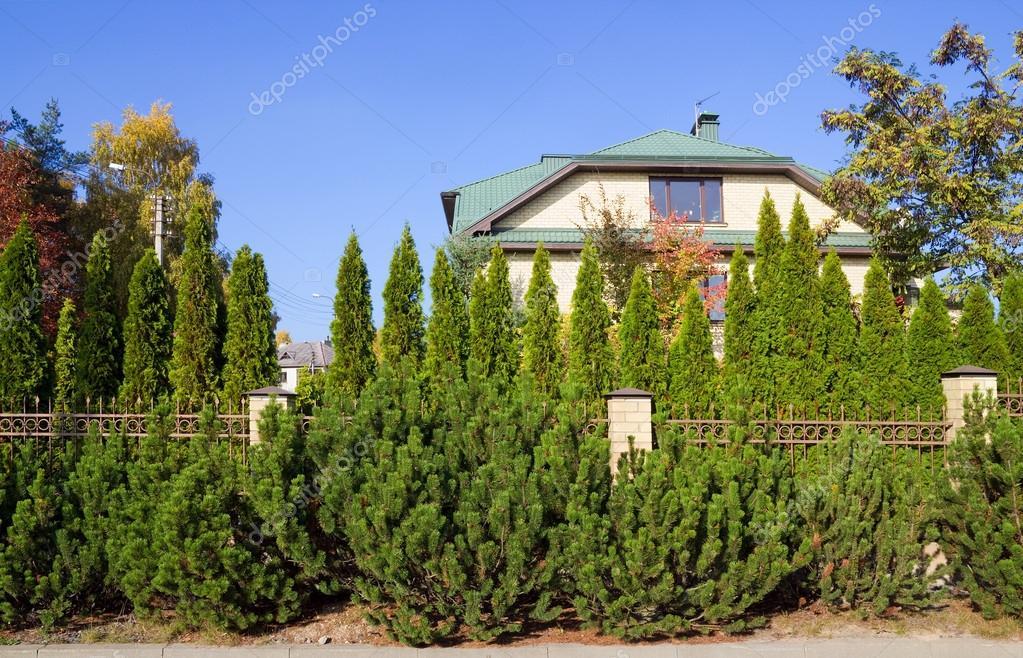 Valla Verde De Arboles Y Arbustos Fotos De Stock C Vilaxlt 36258525 - Arbustos-para-vallas