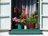 detail krásné rustikální okna s květinami