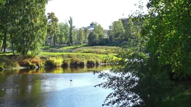 Ducks in river