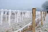 Fotografie Zimní krajina ostnatým drátem plné ledu