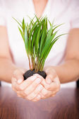 Fotografie Hand Holding Coin With Plant