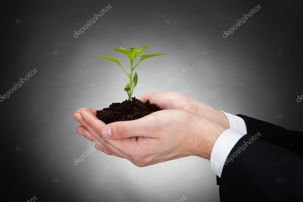 Businessman Holding Sapling Representing Development