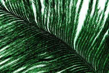 Feather plumage green texture