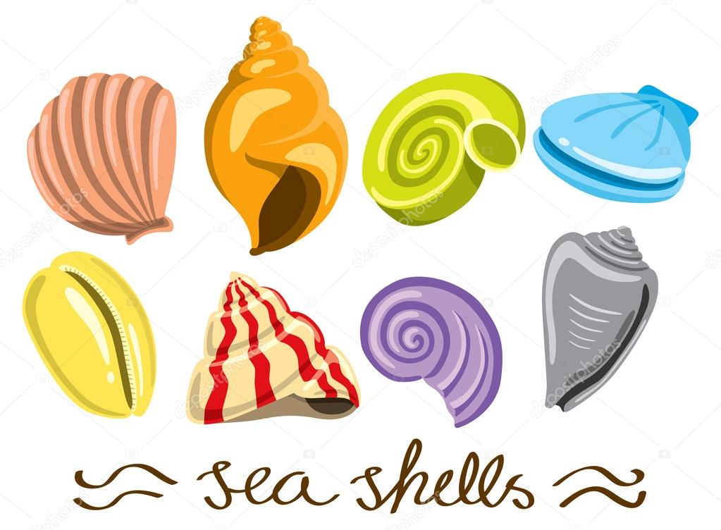 Set of colorful sea shells