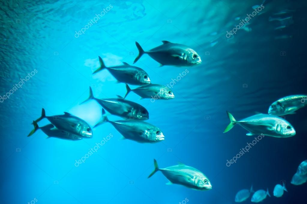 School of fishes