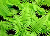 Čerstvý zelený list